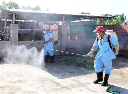 Ministry calls for drastic measures to control dengue fever hinh anh 1