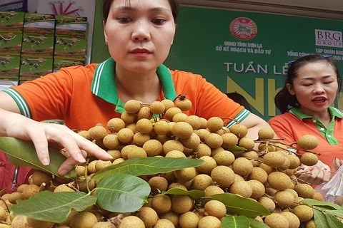 Son La province to export 9 million USD of longan hinh anh 1