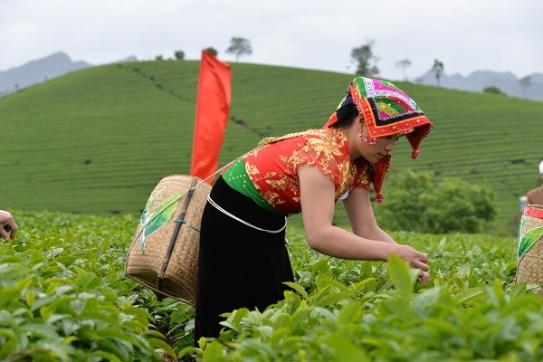 Tea businesses need restructuring to add value hinh anh 1