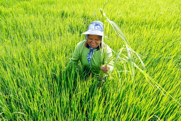 Thailand eyes green agriculture hinh anh 1