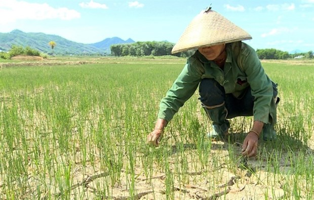 Hot weather continues to hit central provinces hinh anh 1