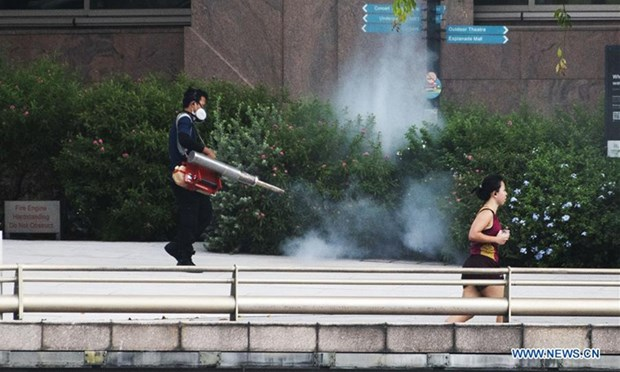 Dengue fever worsens in Singapore hinh anh 1