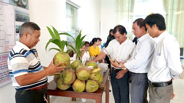 Tra Vinh gets brand certifications for agricultural products hinh anh 1