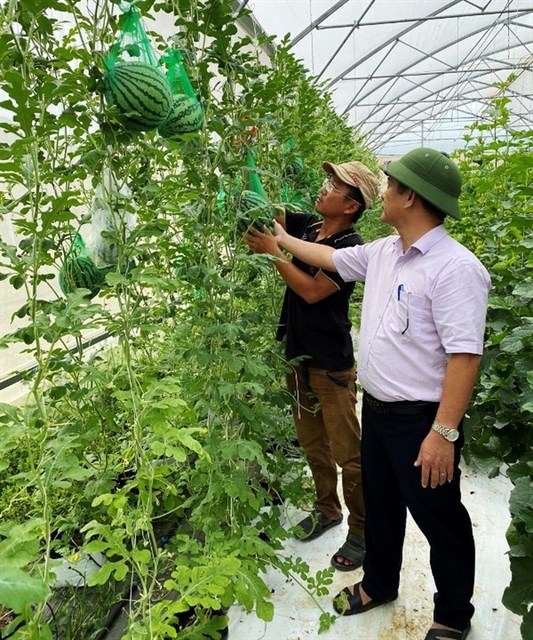 High-tech farming brings good profits to former graphic designer hinh anh 1