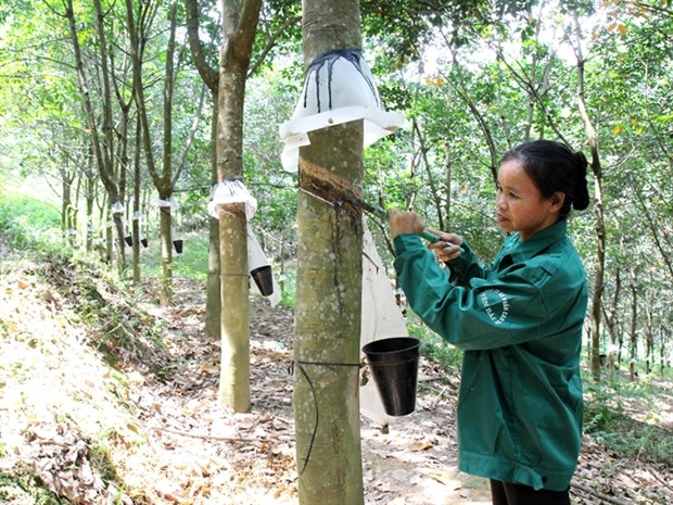 Rubber companies report lower earnings amid falling rubber prices hinh anh 1