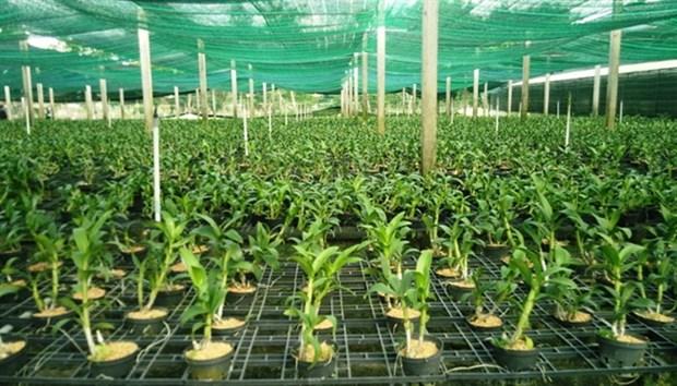 HCM City to build plant variety, animal breeding centres hinh anh 1