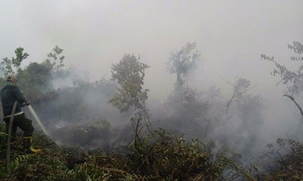 ASEAN works to respond to transboundary haze pollution hinh anh 1