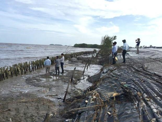 Ca Mau reports serious erosion in western sea dyke hinh anh 1