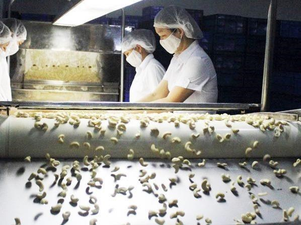Cashew nut exports up 1 percent in H1 hinh anh 1