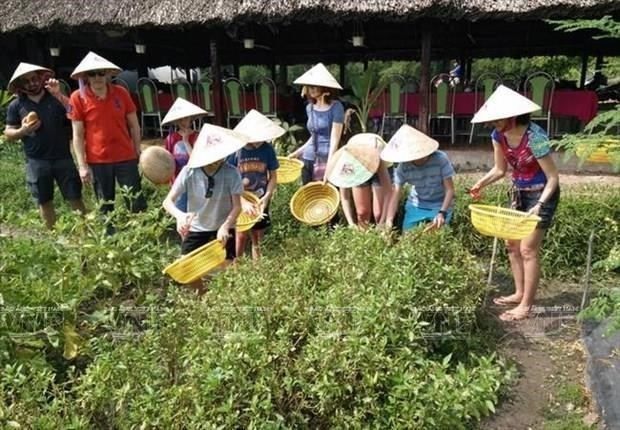 Phu Quoc promotes eco-agriculture in combination with tourism hinh anh 1