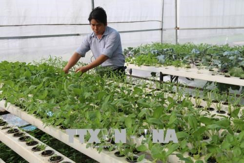 Tien Giang enjoys fruitful agricultural restructuring hinh anh 1