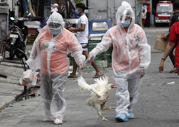 Philippines bans chicken imports from Brazil over COVID-19 scare hinh anh 1