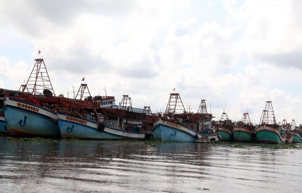 Kien Giang cracking down on illegal fishing hinh anh 1