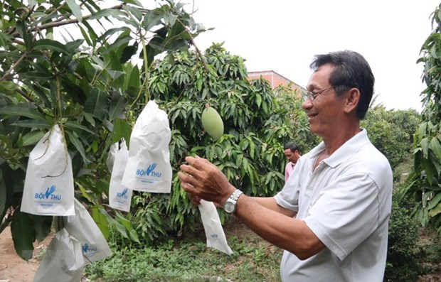 Mekong Delta's fruit farming area to be expanded hinh anh 1