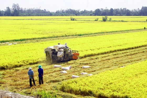 Rice exporters urged to promote brand through safe production hinh anh 1