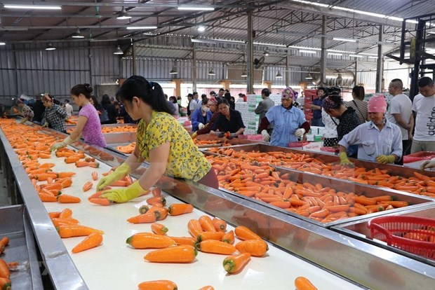 Vinh Phuc promotes agricultural processing industry hinh anh 1