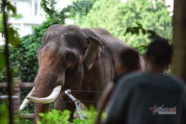Sai Gon Zoo receives tonnes of food donations for its 1,500 animals hinh anh 1