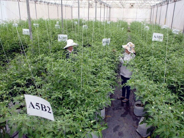 HCM City to invest in agri-food safety plan hinh anh 1