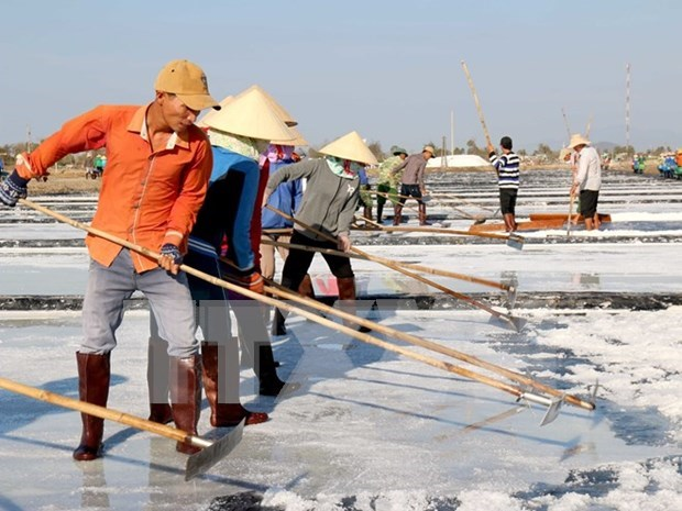 Salt industry development plan for 2021-2030 approved hinh anh 1