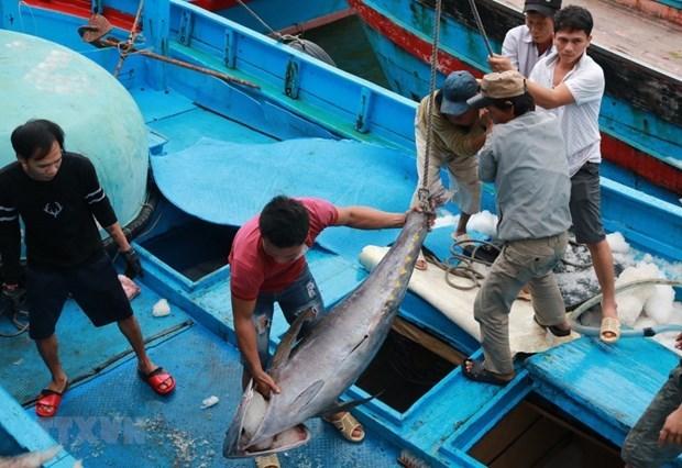 Shrimp, tuna exports to EU see positive signs hinh anh 1