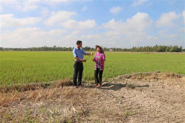 Drought, saltwater intrusion cause big losses to Tra Vinh hinh anh 1