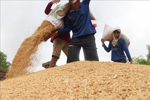 Rice industry must diversify products: experts hinh anh 1