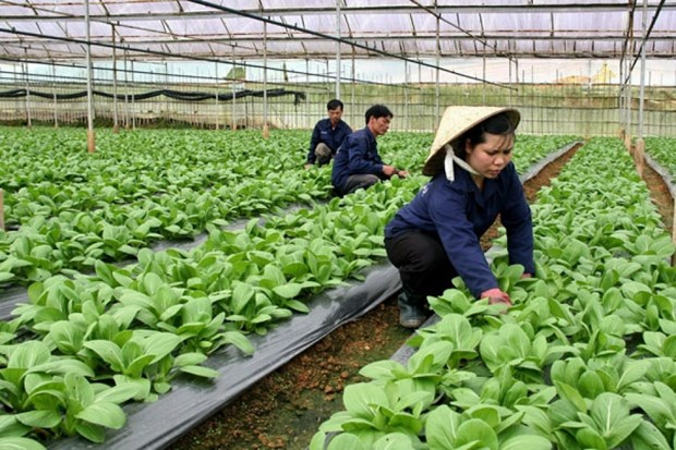 Hanoi's agriculture set to grow at least 3 percent in 2021 hinh anh 1