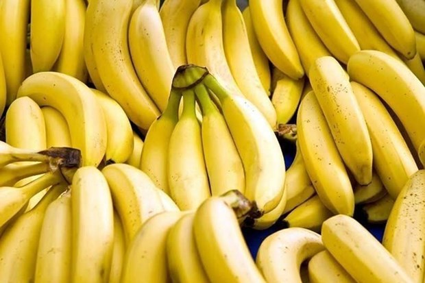 Philippines may lose in banana export race hinh anh 1