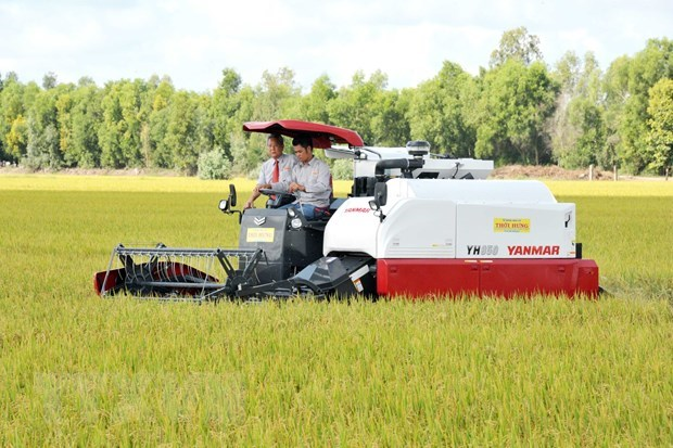 An Giang to ship 126 tonnes of fragrant rice to EU at zero tariff rate hinh anh 1
