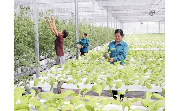 Hanoi moves towards enhanced criteria for new-style rural area development hinh anh 1