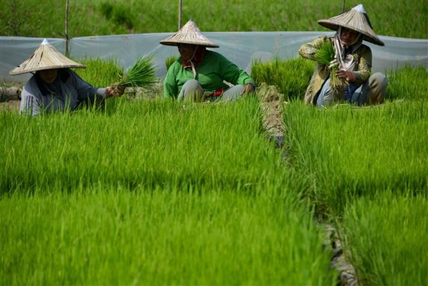 Indonesia to expand farm estates by 10 times of Singapore's size hinh anh 1