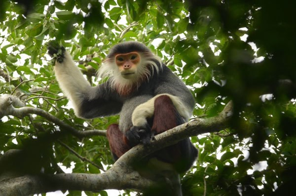 Da Nang approves biodiversity conservation master plan hinh anh 1