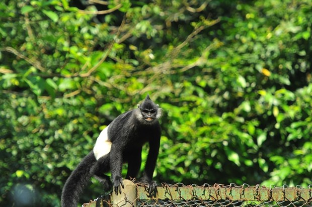PM calls for action to protect endangered langurs in Ha Nam hinh anh 1
