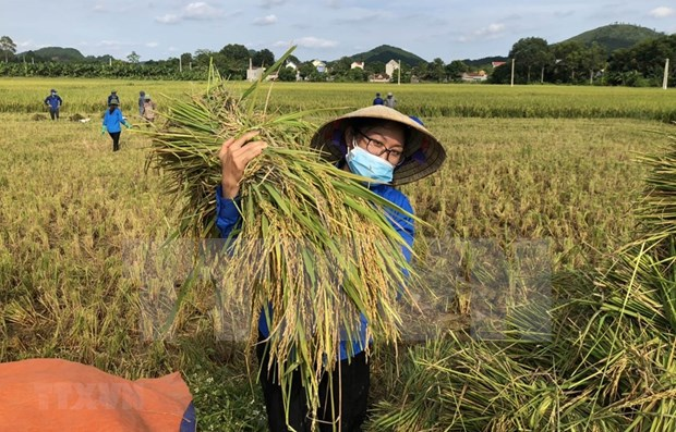 Vietnam sets 17 sustainable development goals to 2030 hinh anh 1