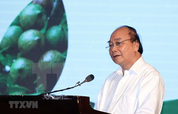 PM: Domestic macadamia sector needs strategy hinh anh 1