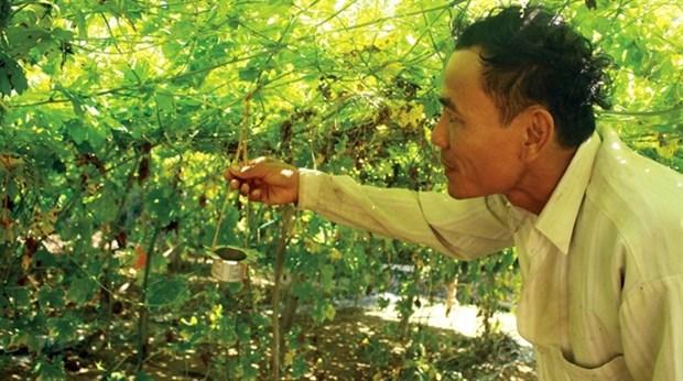 Quang Ngai farmers go organic hinh anh 1
