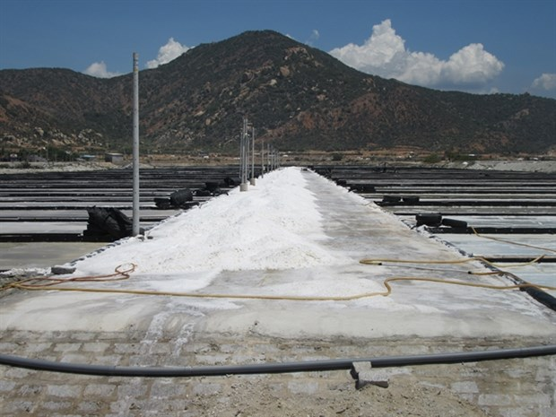 Ninh Thuan to become country's top salt producer hinh anh 1