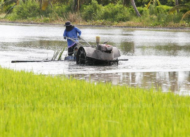 Thailand sees opportunities to boost rice exports to EU hinh anh 1