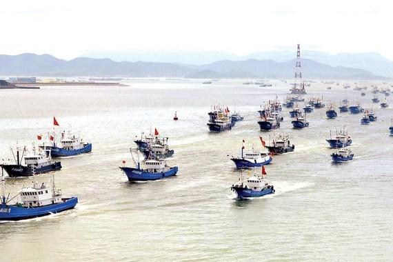 Fish stocks in East Sea fall sharply hinh anh 1