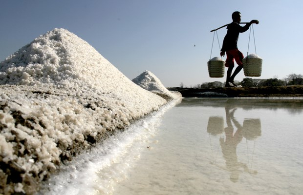 Indonesia seeks way to cut down salt imports hinh anh 1