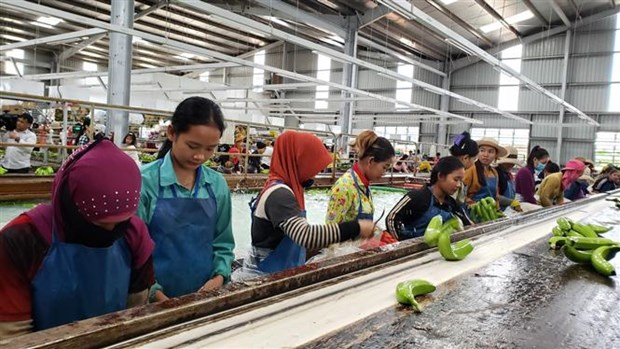 Agricultural projects create stable employment for Vietnamese-Cambodians hinh anh 1