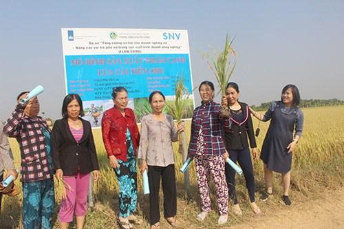 Dutch-funded project empowers women in Binh Thuan hinh anh 1