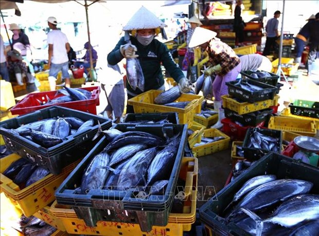 Workshop seeks ways to promote tuna exports to EU hinh anh 1