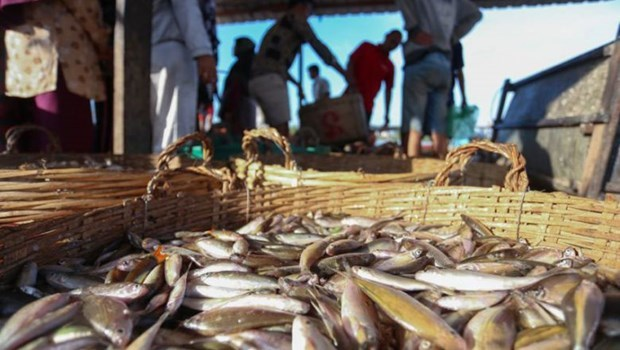 Cambodia's fisheries export slump by over 84 pct hinh anh 1