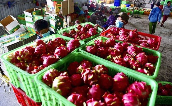 EVFTA helps boost Vietnam's agricultural exports to EU hinh anh 1