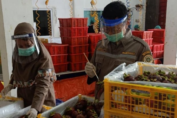 Indonesia records agricultural trade deficit of 2.81 billion USD hinh anh 1