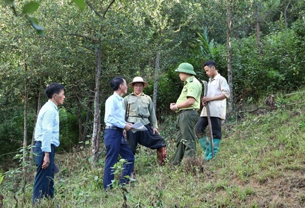 Forests better managed thanks to protection policy hinh anh 1