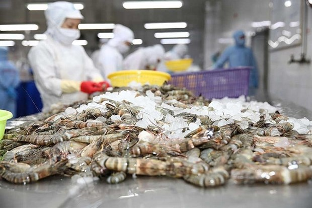 Minh Phu opposes US anti-dumping duty on frozen shrimp hinh anh 1