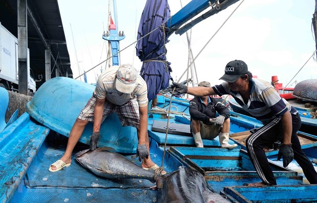 ASEAN Today: Vietnam lauded for efforts to combat illegal fishing hinh anh 1