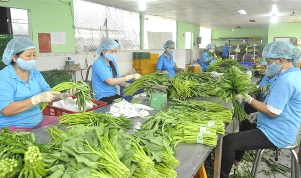 Fruit, vegetable exports expected to revive after nine-month slump hinh anh 1